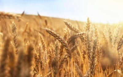 The 2021 Harvest